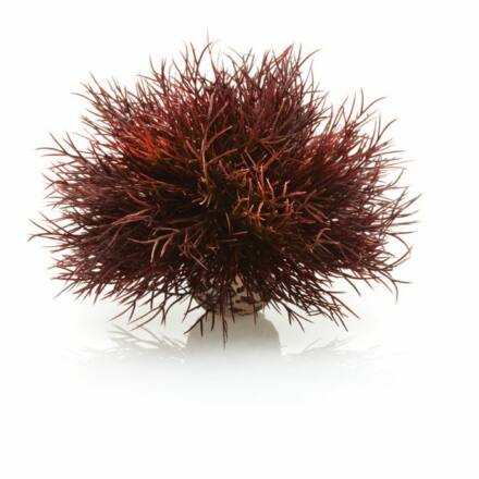 biOrb tengeri liliom karmazsinvörös