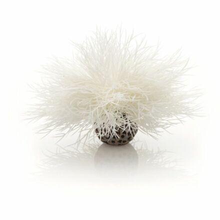 biOrb tengeri liliom fehér