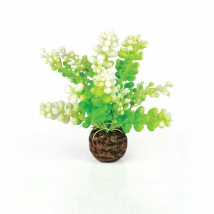 biOrb vizi caulerpa zöld